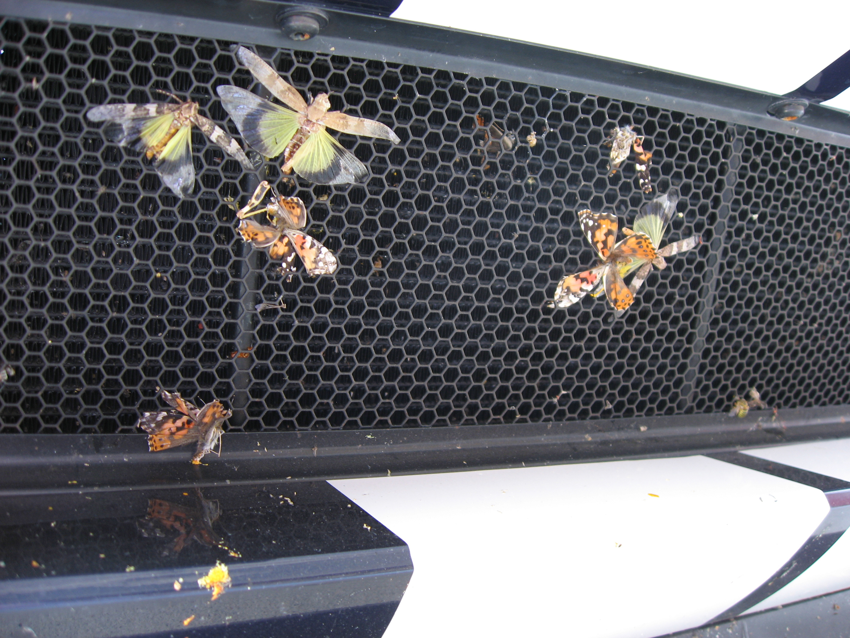 2005 Ford GT Grille bugs